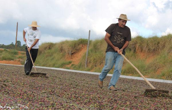 Farmers rotating coffee