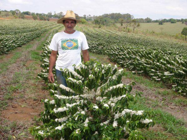 Farmer Catucai flowers