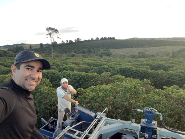 Farmer harvesting coffee